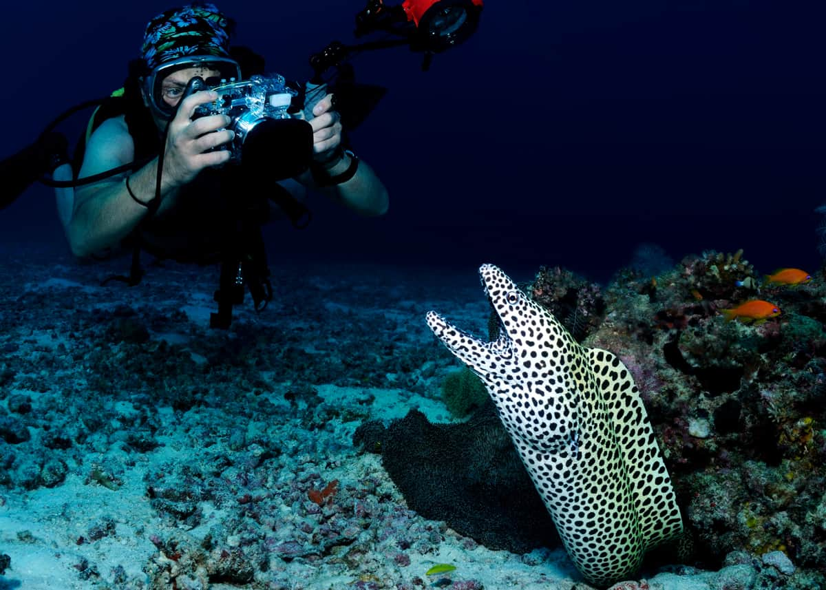 Moray eel and diver