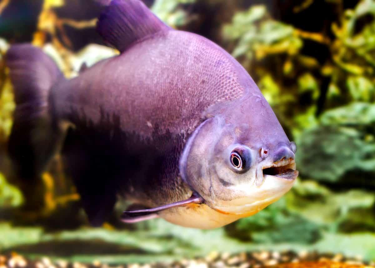 Weird Fish Facts 1